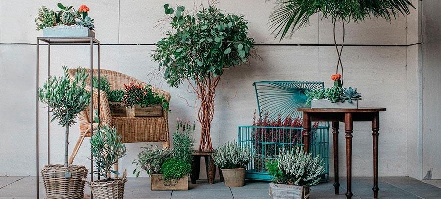 Centros de plantas | Envíos a domicilio en Madrid